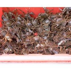 大闸蟹多少钱一斤-南京大闸蟹-南京鲍鲜汇水产品(查看)图片