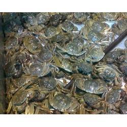 南京螃蟹-螃蟹市场-南京鲍鲜汇水产品(优质商家)图片