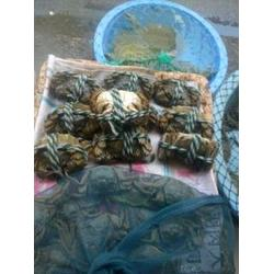 大闸蟹重量标准-南京鲍鲜汇水产品(在线咨询)南京大闸蟹图片