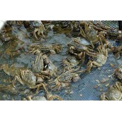螃蟹的是多少|南京鲍鲜汇水产品|南京螃蟹图片