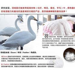 白鸭绒多少钱-俊宏羽绒(在线咨询)鸭绒图片