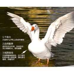 嘉兴市鹅绒-俊宏羽绒-白鹅绒图片
