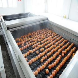 水果清洗机参数-江苏水果清洗机-诸城双兴机械图片