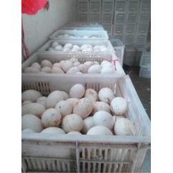 头照鹅蛋鲜蛋种蛋双黄蛋等图片