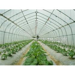 这里质优价廉厂家-30x80椭圆花卉大棚管生产厂家图图片