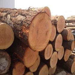 建筑木方多少钱一方-烟台建筑木方-日照木材加工厂图片