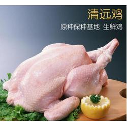 清远鸡养殖场直销,北京清远鸡养殖场,湘粤农业(查看)图片