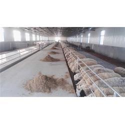 漏粪板、专家谈猪漏粪板、福霖养殖(优质商家)图片