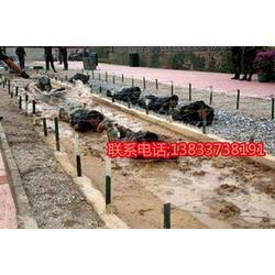 400米障碍器材、鑫欧泰教学设备、军事400米障碍器材单杠图片
