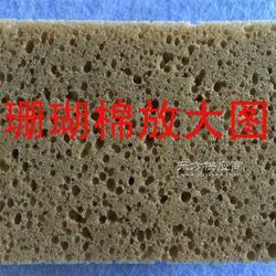 高密度珊瑚海绵图片