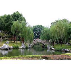 博达讯 旅游景区无线监控-无线监控图片