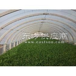 温室材料价/同丰建业温室sell/温室材料报价图片