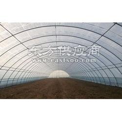 养殖大棚价 同丰建业温室sell/养殖大棚报价图片