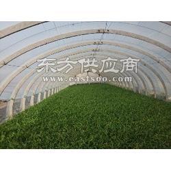 温室材料产品 同丰建业温室sell/温室材料报价图片