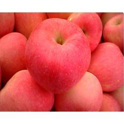 王显超辉果业(图)|山西苹果好吃吗|苹果图片