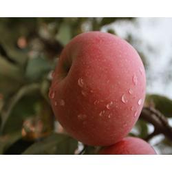 山西水果,水果超市,王显超辉果业(优质商家)图片