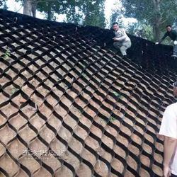 植草护坡绿化蜂巢网格 耐腐蚀土工格室施工图片