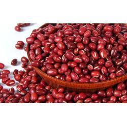低温烘焙糙米、高邮低温烘焙、天泽农业(查看)图片