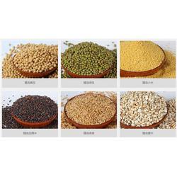 低温烘焙黑豆报价|天泽农业|低温烘焙黑豆图片