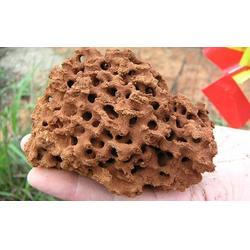福州快速灭红火蚁、福州快速灭红火蚁产品、福州灭红火蚁公司图片