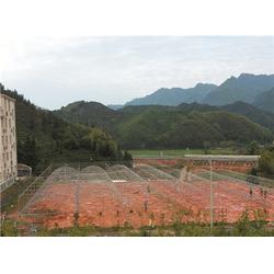福州温室大棚报价_福州温室大棚_福州温室大棚厂家(查看)图片