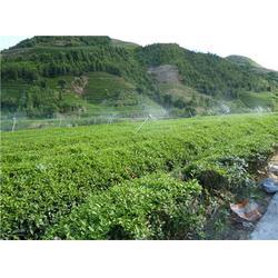 福建蔬菜大棚骨架_大棚_福州元凯温室大棚图片