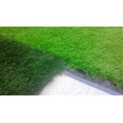 足球场人造草坪,立新体育(在线咨询),天津人造草坪图片