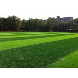 天津人造草坪建设-天津人造草坪-立新体育