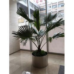松江植物租摆公司、坤石园林(在线咨询)、植物租摆图片