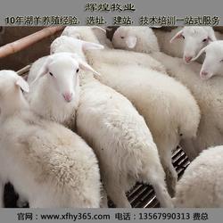 石嘴山湖羊養殖 輝煌牧業 湖羊養殖技術圖片