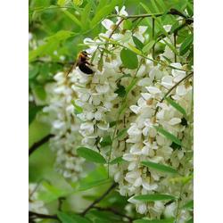 枣花蜜、什么牌子的枣花蜜好、襄阳圣蜂堂蜂业(优质商家)图片