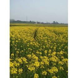 柠檬蜂蜜水的功效-襄阳圣蜂堂蜂业(在线咨询)黄冈市蜂蜜图片