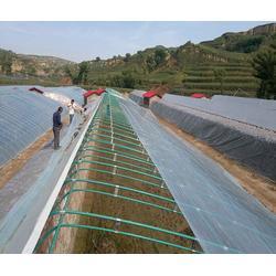 亩蔬菜大棚多少,安阳丰源农业(在线咨询),南漳县蔬菜大棚图片