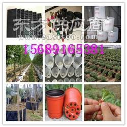 塑料育苗盒-塑料育苗盒生產廠家圖片