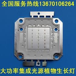 厂家直销 20W红蓝光COB光源 大功率高压cob光源 植物灯光源图片