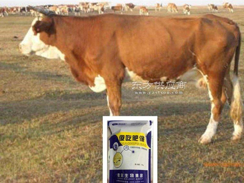 厂家直销肉牛益生菌一件起发空白市场招代理图片