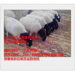 解决肉羊厌食厌料的微生态饲料添加剂图片