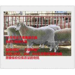 牛用益生菌丨喂牛益生菌啥牌子的好图片
