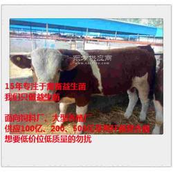肉牛喂什么饲料添加剂增重快育肥快图片