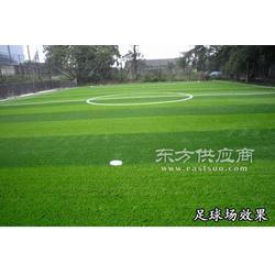 环保型人造草坪定做厂家图片