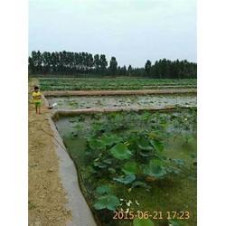 西藏土工膜-防水土工膜低-鑫宇土工材料(优质商家)图片