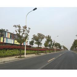 led路灯哪个牌子好-安徽普烁光电-江西led路灯图片
