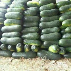 湖北有机蔬菜低价供应、华康蔬菜、湖北有机蔬菜图片