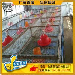 养鸡漏粪养鸡笼垫网、养鸡笼垫网、河北塑料养殖网厂家直供图片