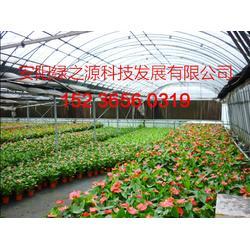 连栋大棚厂家,安阳市绿之源农业公司,临海市连栋大棚图片