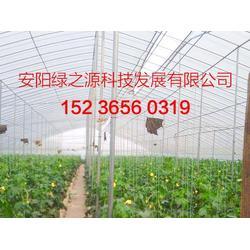 食用菌大棚生产厂家 食用菌大棚 安阳市绿之源公司(查看)图片
