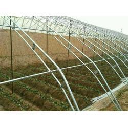 养殖大棚、安阳绿之源农业(在线咨询)、养殖大棚图片