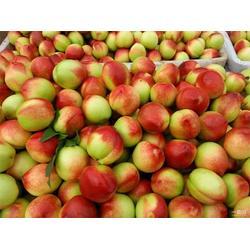 油桃 枣阳桃子基地 油桃的热量图片