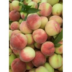 油桃,枣阳桃子基地,油桃需求量图片