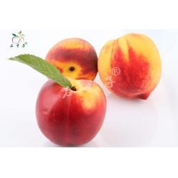 油桃、洪林水果、油桃图片